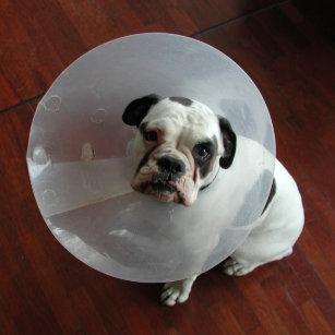 5560ddb6 Unhappy Dog Gifts on Zazzle