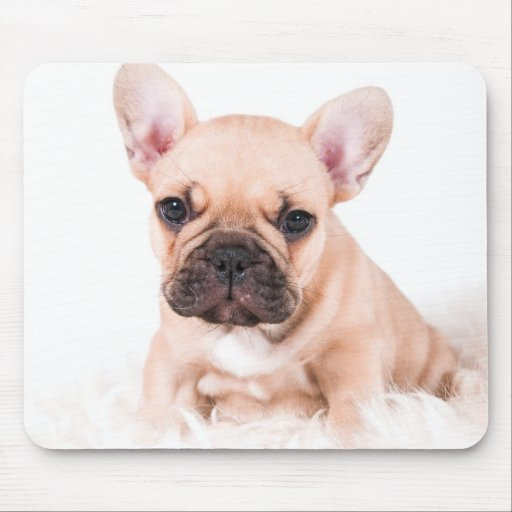 French bulldog. mouse pads
