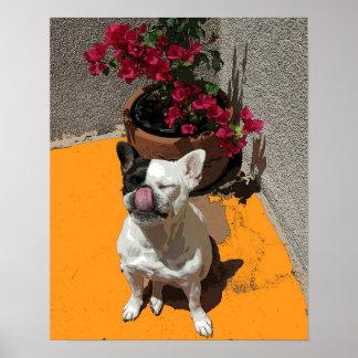French Bulldog Nose Lick Poster