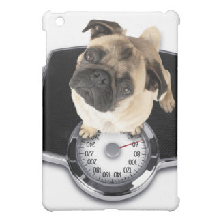 French bulldog on scales looking up at camera iPad mini covers