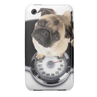 French bulldog on scales looking up at camera iPhone 3 covers