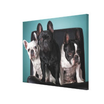 French Bulldog On The Chair Canvas Print