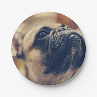 french bulldog paper plate