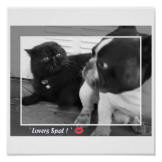 French Bulldog / Persian cat Poster