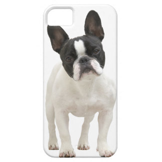 French Bulldog photo iPhone 5 mate case, gift idea iPhone SE/5/5s Case