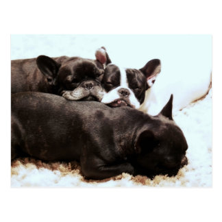 french bulldog pile of puppies.png postcard