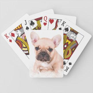 French bulldog. poker cards