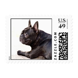French Bulldog Postage Stamps
