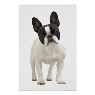 French Bulldog poster print gift idea