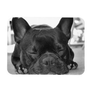 French Bulldog Premium Magnet