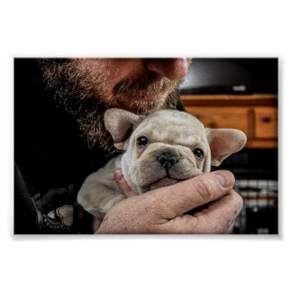 French Bulldog Pup Poster