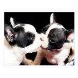 French bulldog puppies postcard