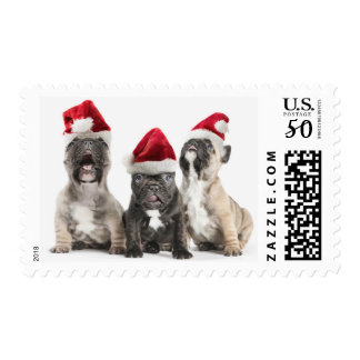 French bulldog puppies sing wearing Santa hats Postage