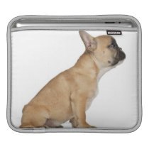 French Bulldog puppy (3,5 months old) iPad Sleeve