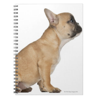French Bulldog puppy (3,5 months old) Spiral Notebook