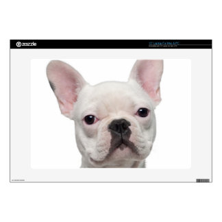 "French Bulldog Puppy (5 months old) 15"" Laptop Decal"