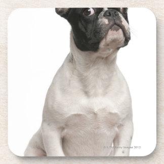 French Bulldog puppy (5 months old) Beverage Coaster