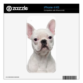 French Bulldog Puppy (5 months old) Skins For The iPhone 4S
