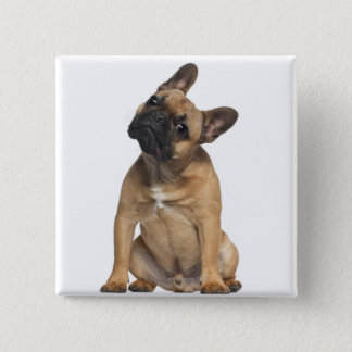 French Bulldog puppy (7 months old) Button