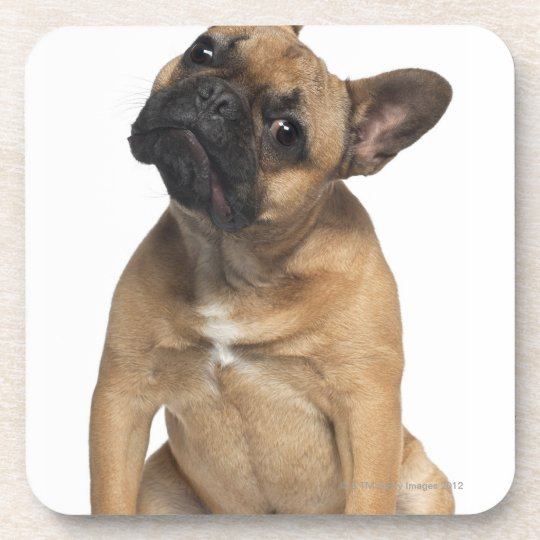 French Bulldog puppy (7 months old) Coaster