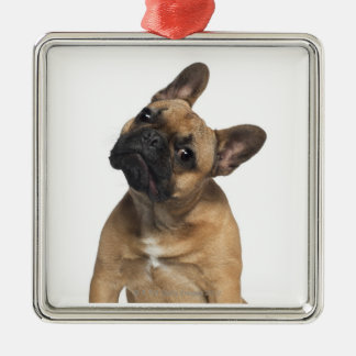 French Bulldog puppy 7 months old Ornament