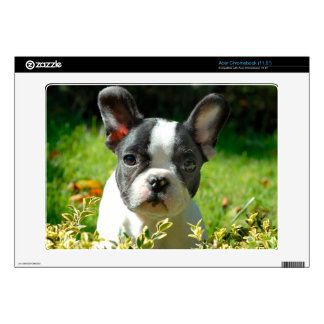 French bulldog puppy behind the foliage acer chromebook skins