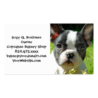 French bulldog puppy behind the foliage pack of standard business cards