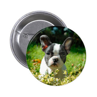 French bulldog puppy behind the foliage 2 inch round button