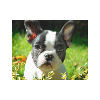 French bulldog puppy behind the foliage canvas print