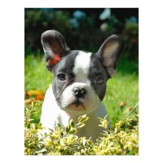 "French bulldog puppy behind the foliage 8.5"" x 11"" flyer"