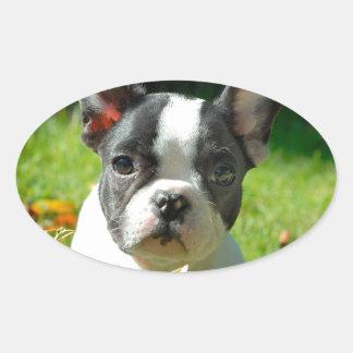 French bulldog puppy behind the foliage oval sticker