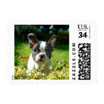 French bulldog puppy behind the foliage postage