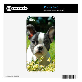 French bulldog puppy behind the foliage skin for the iPhone 4