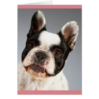 French Bulldog Puppy Dog Blank Note Card