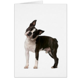 French bulldog - puppy dog - frenchie dog card