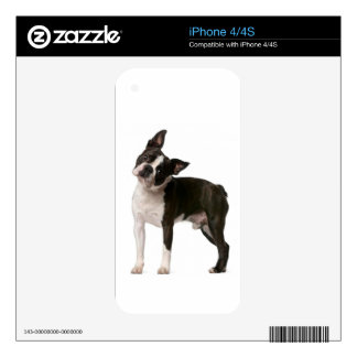 French bulldog - puppy dog - frenchie dog iPhone 4S decals