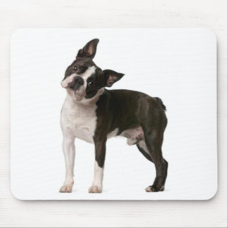 French bulldog - puppy dog - frenchie dog mouse pad