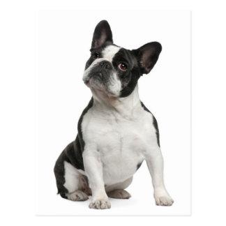 French Bulldog Puppy Dog Post Card
