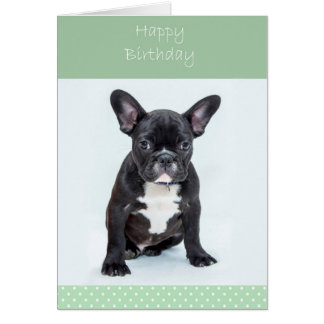 French Bulldog Puppy Happy Birthday Greeting Card