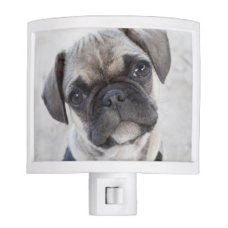 French Bulldog puppy looking cute Night Light