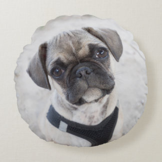 French Bulldog puppy looking cute Round Pillow