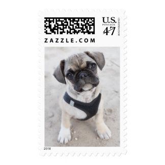French Bulldog puppy looking cute Stamp