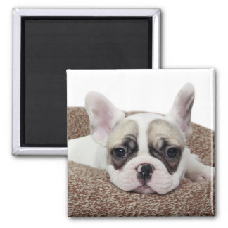 French Bulldog Puppy Lying In A Dog Bed 2 Inch Square Magnet