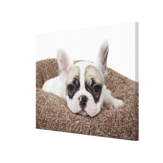French Bulldog Puppy Lying In A Dog Bed Canvas Print