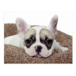 French Bulldog Puppy Lying In A Dog Bed Postcard