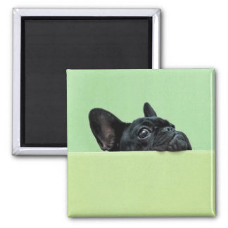 French Bulldog Puppy Peering Over Wall Magnet