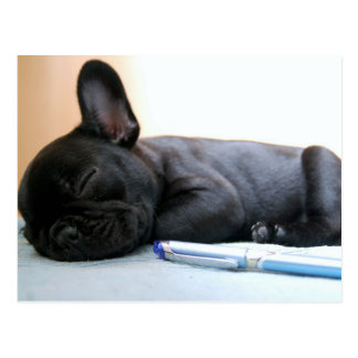 french bulldog puppy.png postcard