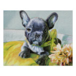 french bulldog puppy posters