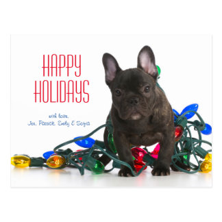 French Bulldog Puppy Tangled In Lights Postcard