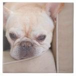 French bulldog resting on sofa large square tile